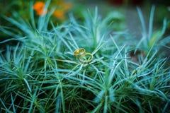 在绿色棕榈灌木的婚戒 免版税库存图片