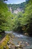 在绿色森林中间的山河 免版税图库摄影