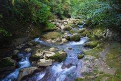 在绿色森林,用青苔盖的石头中间的山河 免版税图库摄影
