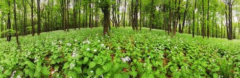 在绿色森林- 360的花全景 免版税库存图片