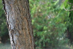 在绿色植物中的南部的树 库存照片