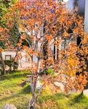 在绿色植物中的死的灌木在春天 库存图片