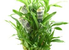 在绿色植物叶子的美元,得到股息或回归的概念从您的金钱,投资它在更好的未来 免版税库存照片