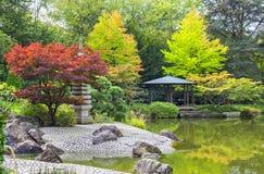 在绿色池塘附近的红色树在日本庭院里 免版税库存照片
