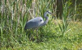 在绿色沼泽中 免版税图库摄影