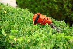 在绿色灌木的修剪工具 库存图片