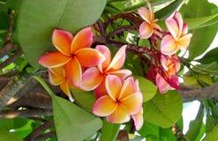 在绿色灌木的橙色花 免版税库存照片