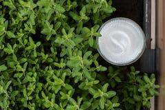 在绿色灌木的聚光灯 库存照片