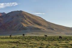 在绿色牧场地的马山的 免版税库存照片