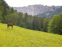在绿色牧场地的马 免版税库存照片