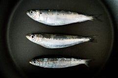 在黑色的三个沙丁鱼 免版税库存照片