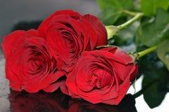 在黑色的三朵玫瑰 库存照片