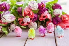 在紫色的五颜六色的郁金香 免版税库存照片