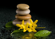 在黑色的平衡的禅宗石头与黄色花 库存图片