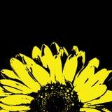 在黑色的抽象黄色大丁草花 免版税库存图片