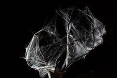 在黑色的抽象Spiderweb 库存图片