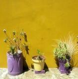 在黄色的花盆在BoKaap,开普敦,南非绘了房子 图库摄影