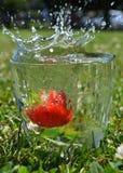 在黑色的草莓飞溅 免版税库存图片