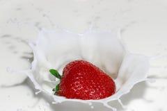 在黑色的草莓飞溅 图库摄影