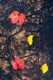 在黄色的颜色的秋叶红色和,一个水坑的表面上的浮游物在路的 免版税图库摄影