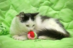 在绿色的黑白小猫与玩具球 图库摄影
