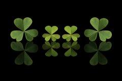 在黑色的绿色三叶草叶子 库存图片