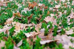 在绿色的黄色叶子 免版税图库摄影