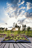 在紫色石南花草甸的夏天风景在日落骗局期间的 免版税库存图片