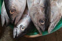 在绿色碗的一条大灰色鱼新鲜的海金枪鱼待售 免版税库存图片