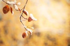 在黄色秋叶的第一雪在森林里 库存图片