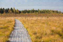 在黄色秋天fild的路在沼泽 免版税库存图片