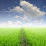 在绿色米领域和太阳天空的方式 免版税库存图片