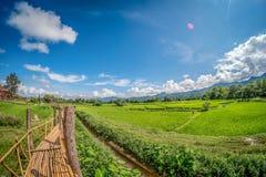 在绿色米领域的竹桥梁有自然和蓝天背景 免版税图库摄影