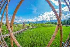 在绿色米领域的竹桥梁有自然和蓝天背景 图库摄影