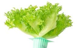 在绿色罐的新鲜的绿色橡木散叶莴苣 图库摄影