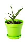 在绿色罐的芦荟维拉 免版税库存照片