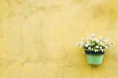 在绿色罐的花在黄色墙壁bac装饰了 库存图片