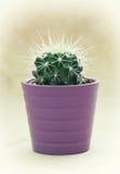 在紫色罐的绿色多刺的仙人掌 免版税库存图片