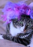在紫色羽毛帽子的猫 免版税库存照片