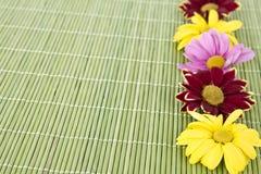在绿色背景温泉动机的可爱的花 图库摄影