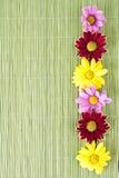 在绿色背景温泉动机的可爱的花 库存图片