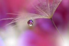 在紫色背景特写镜头的蒲公英 平静的抽象特写镜头艺术摄影 墙纸的印刷品 花卉幻想设计 免版税库存照片