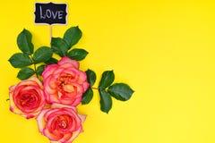 在黄色背景的三朵桃红色玫瑰 库存图片