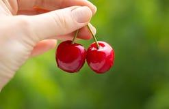在绿色背景的两棵红色樱桃 图库摄影