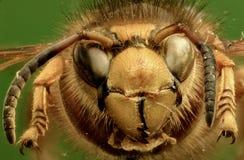 在绿色背景的中间黄蜂 免版税库存图片