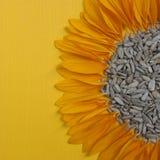 在黄色背景的向日葵种子 免版税库存照片