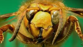 在绿色背景的大黄蜂 免版税库存照片