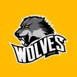 在黄色背景的愤怒的狼体育传染媒介商标概念 免版税库存图片