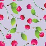在紫色背景的成熟樱桃 无缝的模式 免版税库存照片