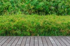 在绿色背景的木平台 库存图片